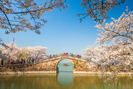 Sakura, Turtle Head Islet, Wuxi, Jiangsu, Taihu Province
