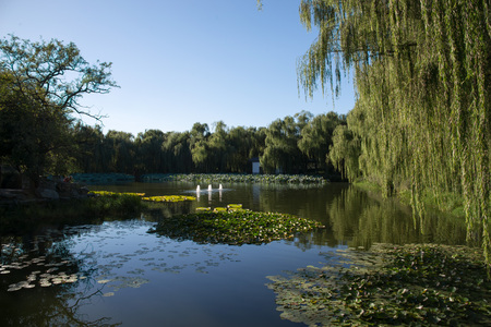 Beijing park with pond view