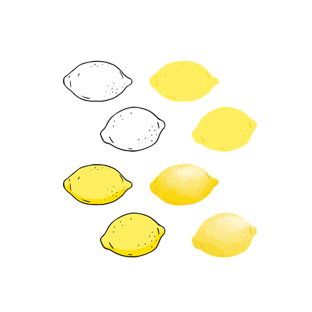 Hand drawn vector illustration of lemon outline,color,watercolor style.