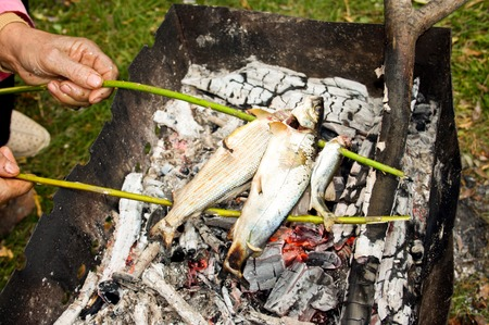 coal fish: The person fries fresh fish on fire coals