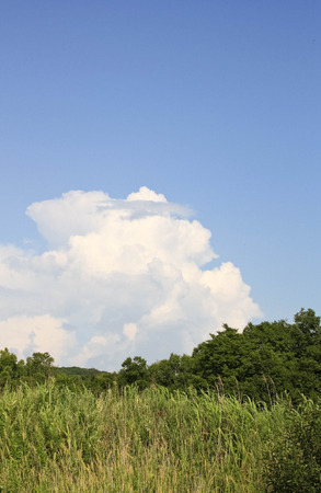 evaporate: The beautiful cloud has hung over wood