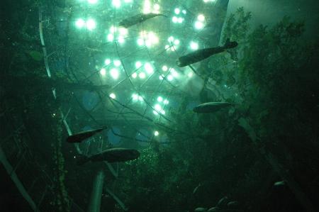 Fish swim in green underwater chamber
