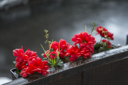 red flowers in a basket on the balcony overlooking the street. rainy day Banco de Imagens