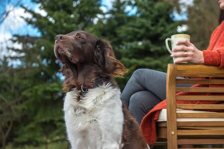The setter dog sitting next to his owner on the outdoor
