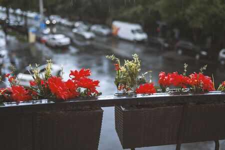 Red flowers in a basket on the balcony overlooking the street.