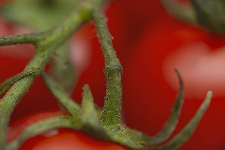 fresh red tomatoes with tomato on background,  super macro shot. Standard-Bild