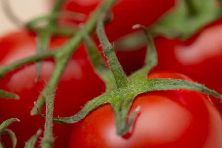 Close up macro image of a red ripe tomato on a green vine