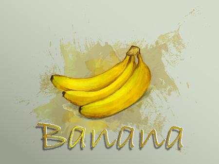 Banana watercolor vector food illustration.Hand painted watercolor illustration.