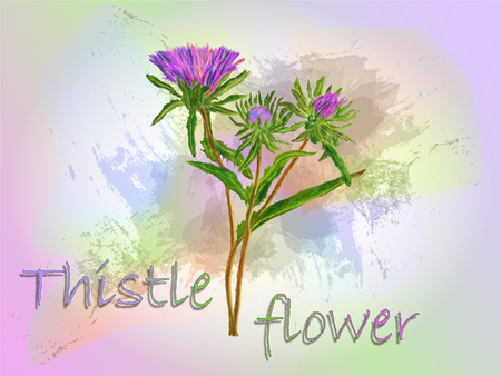 Thistle watercolor vector food illustration.Hand painted watercolor illustration.