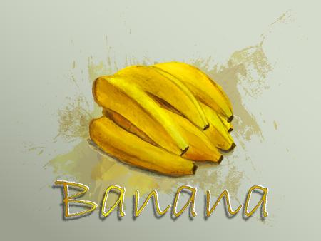 Illustrazione dell'alimento di vettore dell'acquerello della banana Illustrazione dell'acquerello dipinto a mano. Archivio Fotografico - 93070271