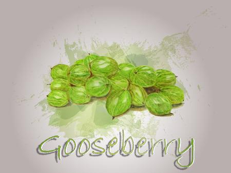 Illustrazione dell'alimento di vettore dell'acquerello dell'uva spina Illustrazione dell'acquerello dipinto a mano. Archivio Fotografico - 93070272