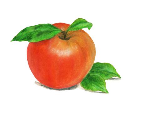 Apple watercolor food illustration.Hand painted watercolor illustration.