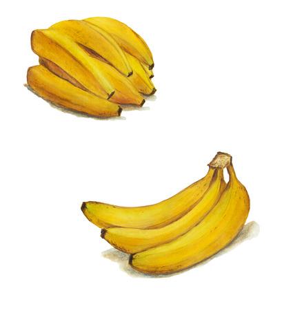 Banana watercolor food illustration.Hand painted watercolor illustration. Archivio Fotografico