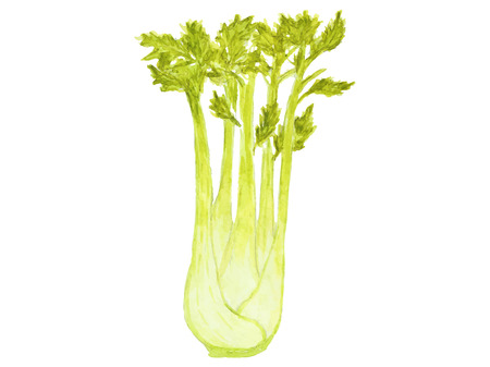 Green stalks of celery on a white background.
