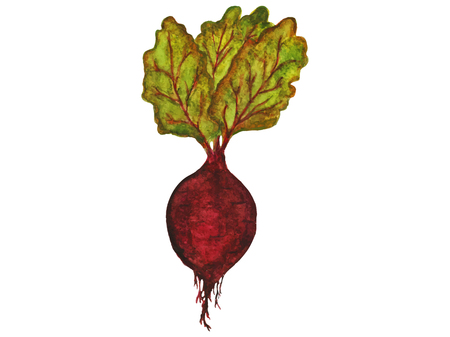 Ripe beetroot with leaves on white background. Vettoriali