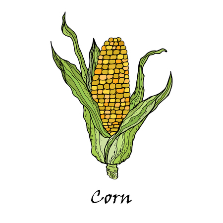 Corn vegetable. corncob with leaves. Vegetarian and vegetarian cuisine vegetable and agricultural ripe harvests. Archivio Fotografico - 104634024