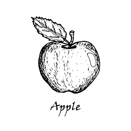 Hand drawn illustration of an apple with a  leaf isolated on a white background