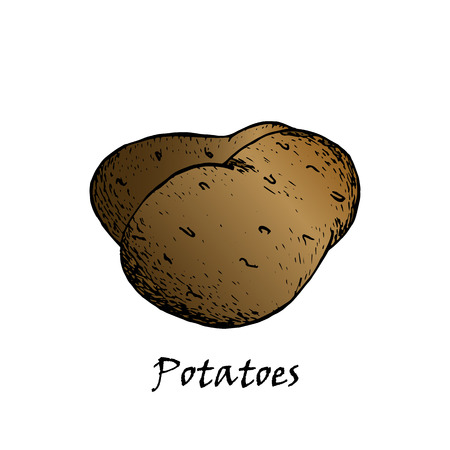 Potato drawing. Isolated hand drawn potatoes heap. Vegetable artistic style illustration. Detailed vegetarian food sketch. Farm market product. Archivio Fotografico - 104634076