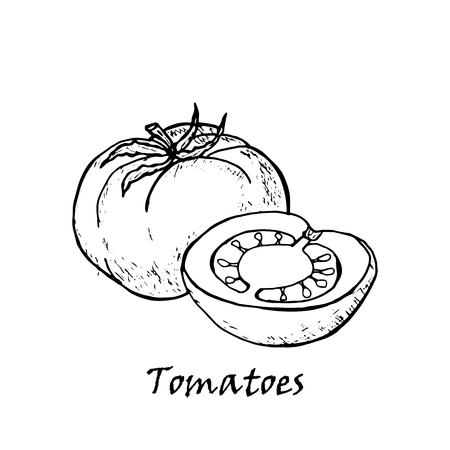 Hand drawn illustration of tomatoes with a leaf isolated on white background