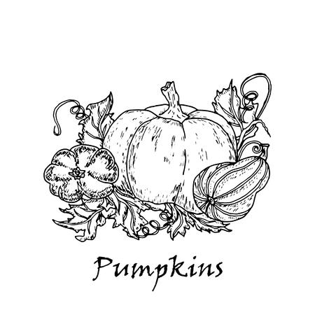 Hand drawn illustration of three multicolored pumpkins