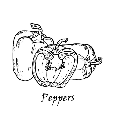 Hand drawn illustration of three peppers, isolated on white background