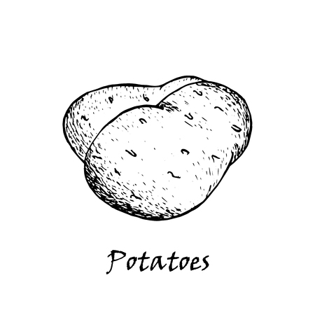 Potato drawing. Isolated hand drawn potatoes heap. Vegetable artistic style illustration. Detailed vegetarian food sketch. Farm market product.
