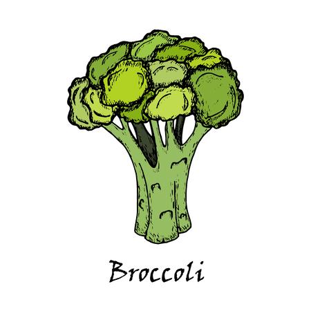 Broccoli tekening. Geïsoleerd op witte achtergrond. Hand getekend in een grafische stijl. Vegetarisch eten.