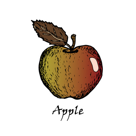 Hand drawn illustration of an apple with a green leaf isolated on a white background Vettoriali
