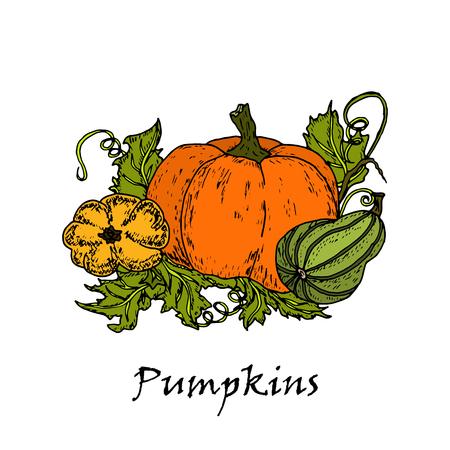 Hand drawn illustration of three multicolored pumpkins, isolated on white background in vector. Archivio Fotografico - 105834344