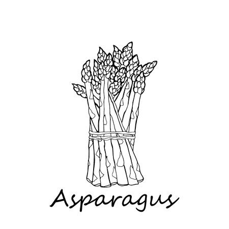 asperges sur fond blanc Vecteurs