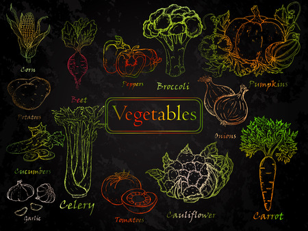 Set of hand-drawn vegetables. Carrots, potatoes, broccoli, beets, corn, garlic, onions, pumpkin, tomatoes, cucumber, pepper, cauliflower, celery. Vettoriali