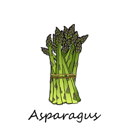 Green asparagus on a white background