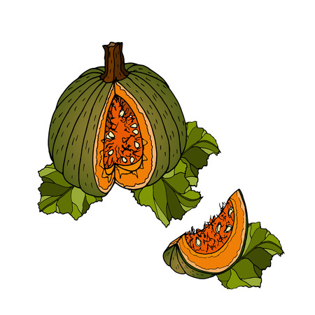 Different varieties of pumpkins. Sketches of orange vegetables. Vector illustration of the autumn harvest. Thanksgiving Day. Archivio Fotografico - 109685919