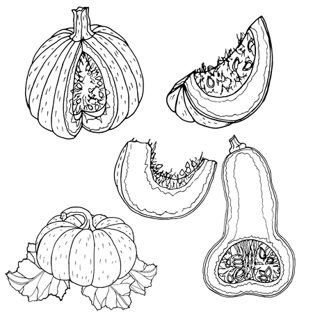 Pumpkin vector drawing.Farm market product. Hand drawn vector illustration.