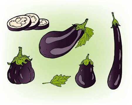 Ripe and juicy purple eggplant. A set of eggplant.