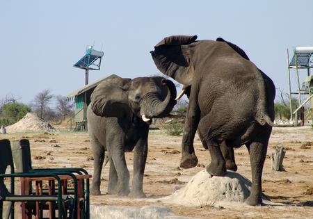 Elepant on Anthill