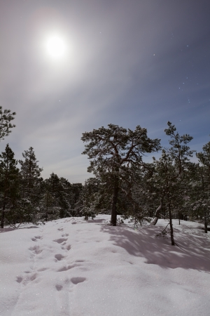 Winter forest in the moonlight photo