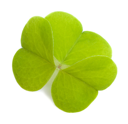 Wood sorrel leaf isolated on a white  photo