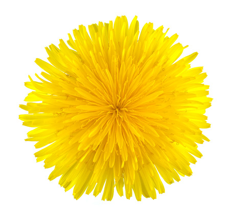 Dandelion isolated on a white  photo