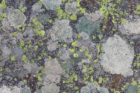 liquen: Liquen textura  Foto de archivo