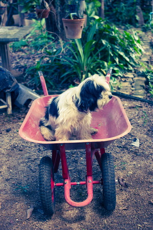 double wheel barrow photo