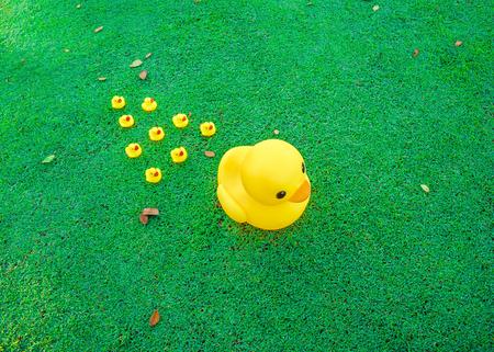 in row: Concepto de la dirección, Grupo grande pato amarillo líder de pequeño pato en el campo de vidrio.