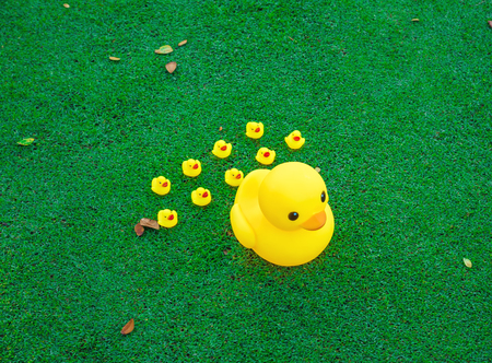 yellow duck: Leadership concept , Big yellow duck leading group of small duck  on glass field.