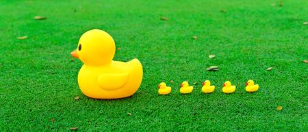 in row: Concepto de la dirección, Gran grupo líder pato amarillo en el campo de vidrio.