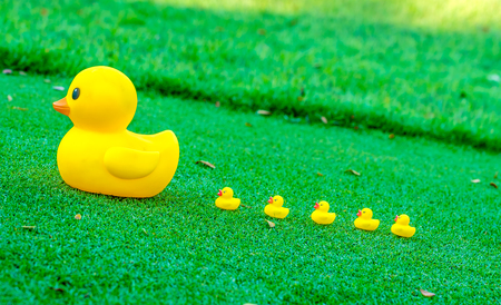 follower: Leadership concept , Big yellow duck leading group of small duck  on glass field.