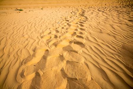 footsteps: Footsteps on desert