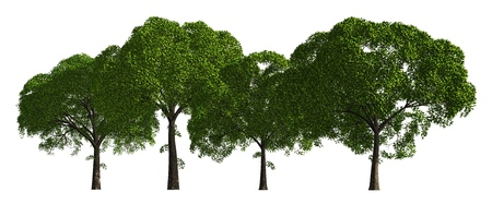 Trees in a row isolated on white 3d illustration Stock Photo