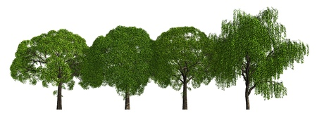 Group of trees isolated on white 3d illustration Stock Photo