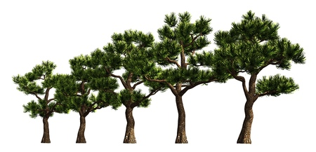 3D illustration trees row isolated on white, can be used for matte painting. Stock Photo