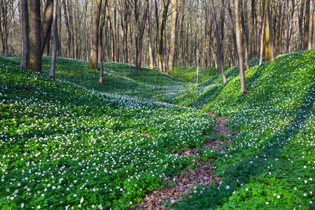 misterious: Wide path goes through huge meadows covered with white flowers as beads and misterious shadows lay on the ground. Stock Photo